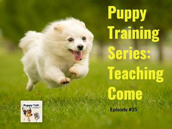 Puppy Training Series: Teaching Come