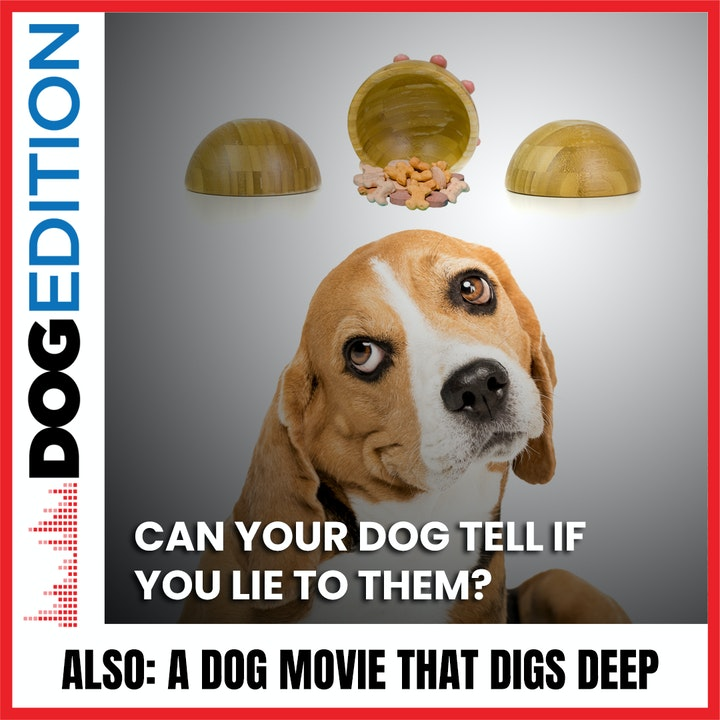 Can Your Dog Tell If You Lie To Them?   A Dog Movie That Digs Deep   Dog Edition #35