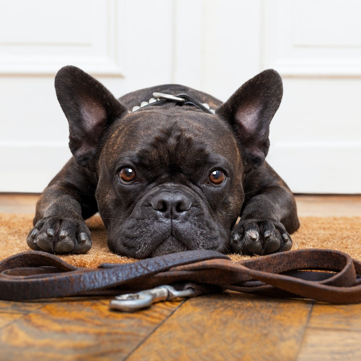 4 Things That Every Puppy Needs