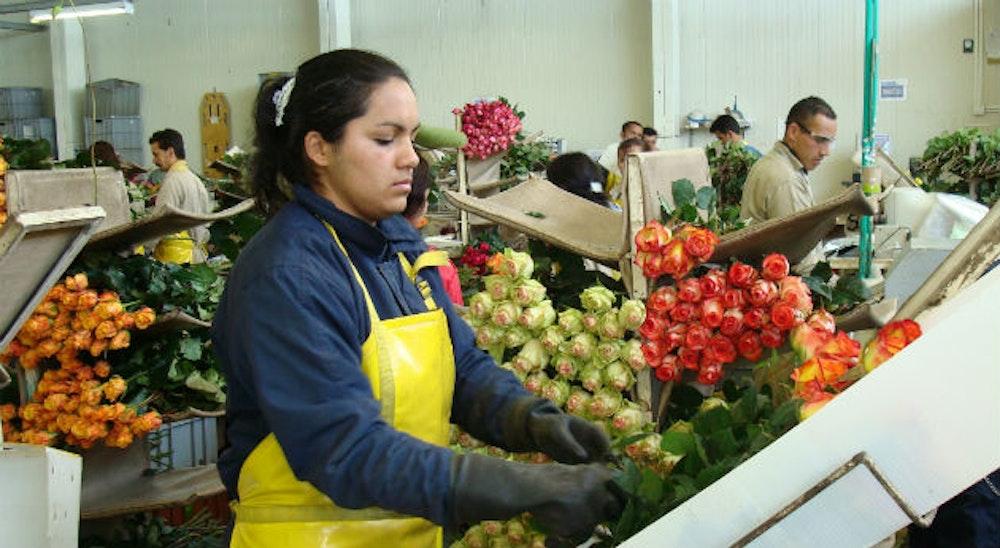 Trabajadores colombianos tendrán salario mínimo de $908.526 más auxilio de transporte de $106.454 en el 2021