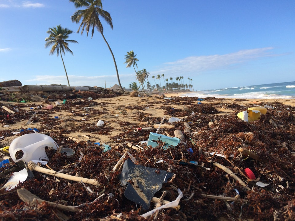 Plastic Beaches: A Cleanup Challenge