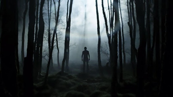 Creeper in the Woods Image