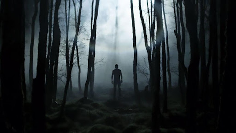 Creeper in the Woods