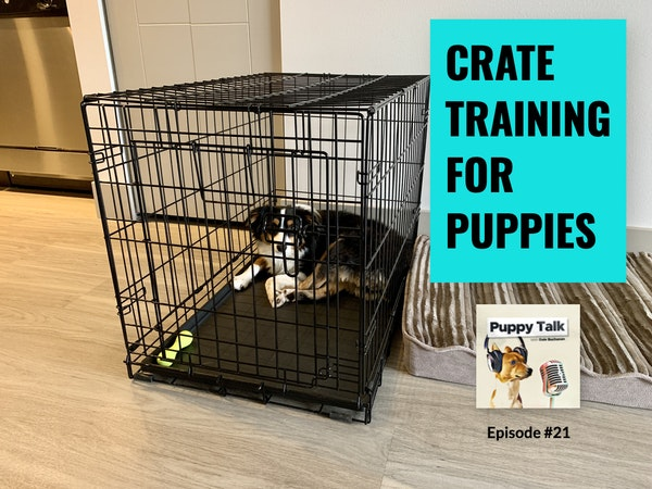 Crate Training for Puppies