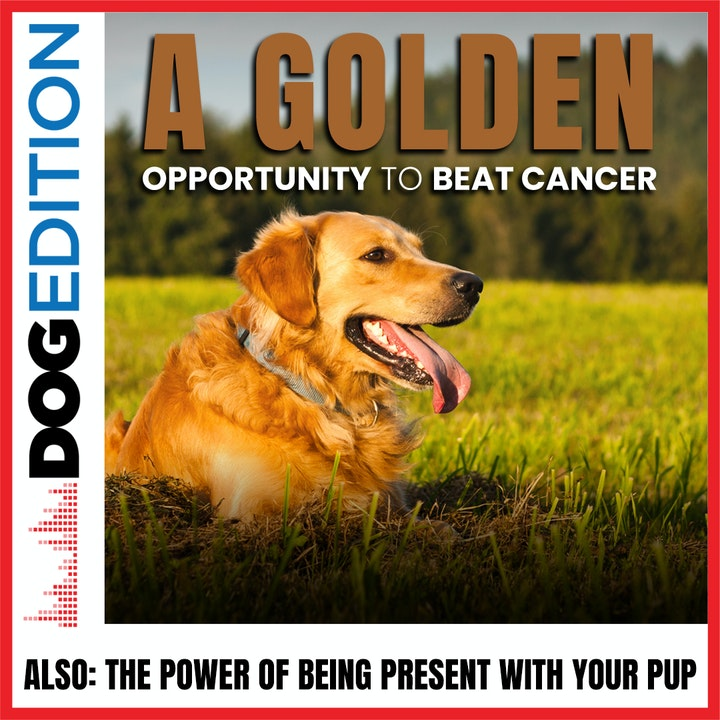 """A """"Golden"""" Opportunity to Beat Cancer 