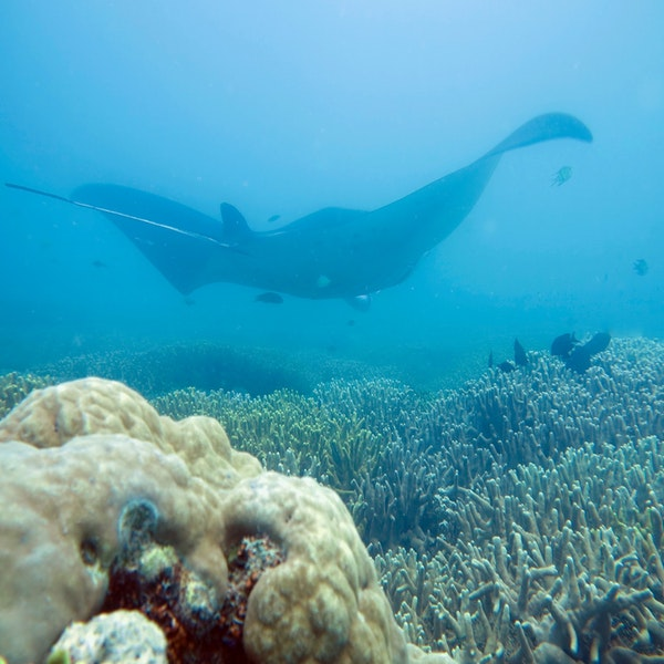 Ep. 3 Cynthia Matzke: Filming a way to Ocean Health Image