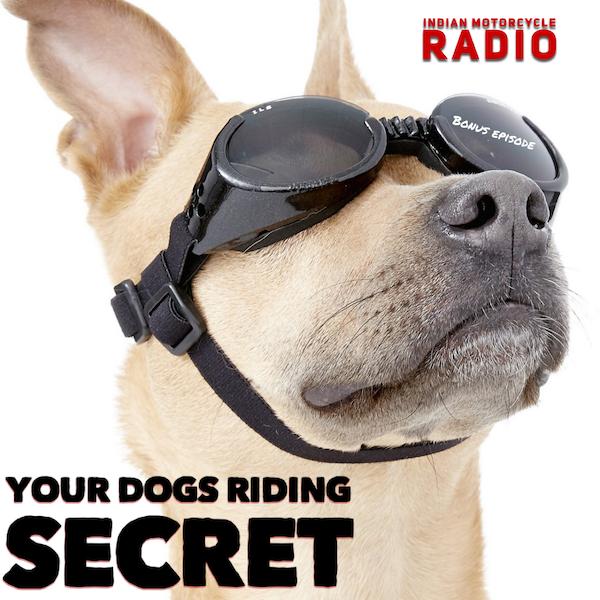 The Secret Joy of Dogs