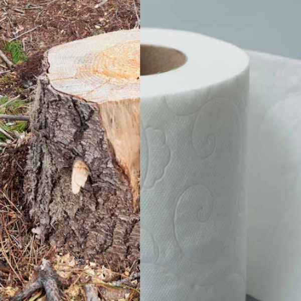 Ep. 11 Michael Zeinker: The Issue With Tissue and Toilet Paper Image