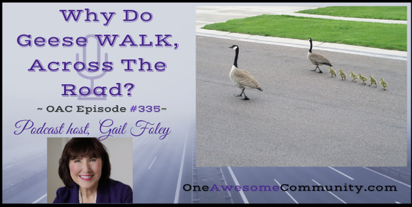 OAC 335 Why Do Geese WALK Across The Road?