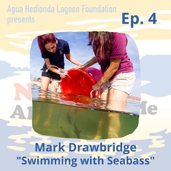 Ep. 4 Mark Drawbridge: Swimming with Seabass Image