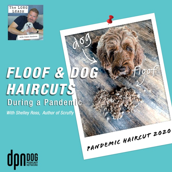 Floof & Dog Haircuts During a Pandemic   The Long Leash #3