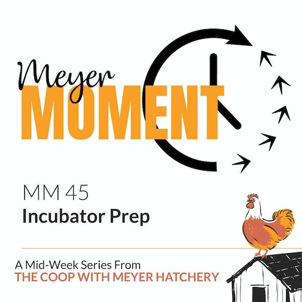 Meyer Moment: Incubator Prep Image