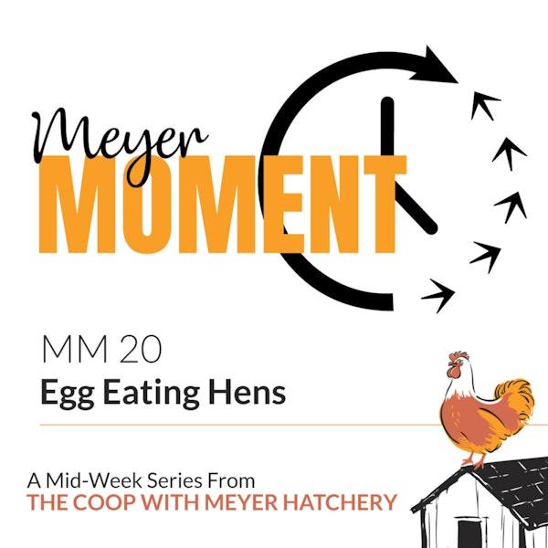 Meyer Moment: Egg Eating Hens Image
