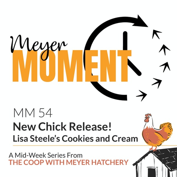 Meyer Moment: New Release! Lisa Steele's Cookies and Cream Day-Old Chick's Image