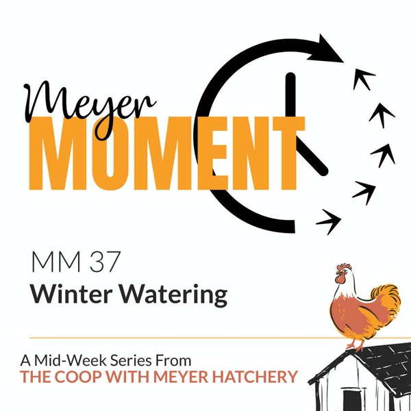 Meyer Moment: Winter Watering Image