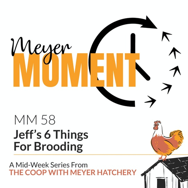 Meyer Moment: Jeff's 6 Things For Brooding Image