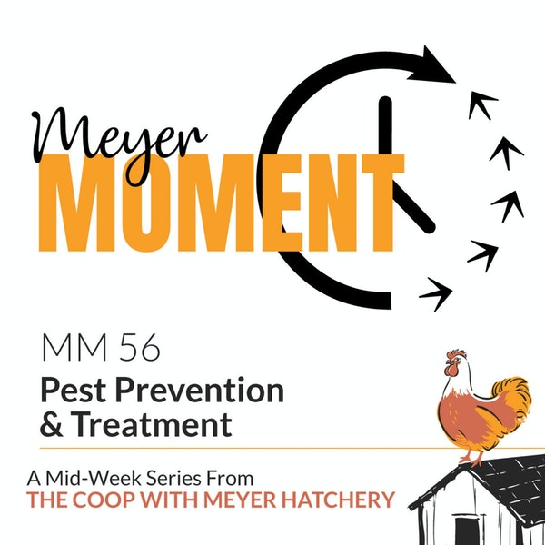 Meyer Moment: Pest Prevention & Treatment Image