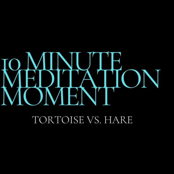 10 Minute Meditation Moment - Tortoise Vs. Hare Image