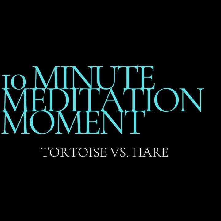 Episode image for 10 Minute Meditation Moment - Tortoise Vs. Hare