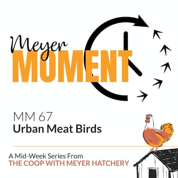 Meyer Moment: Urban Meat Birds