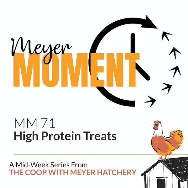 Meyer Moment: High Protein Treats Image