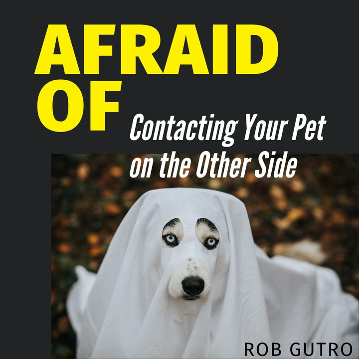 Afraid of Contacting Your Pet on the Other Side