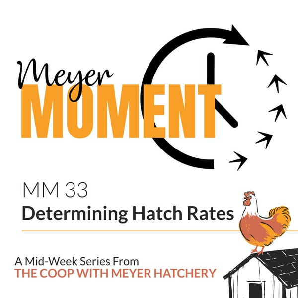 Meyer Moment: Determining Hatch Rates Image
