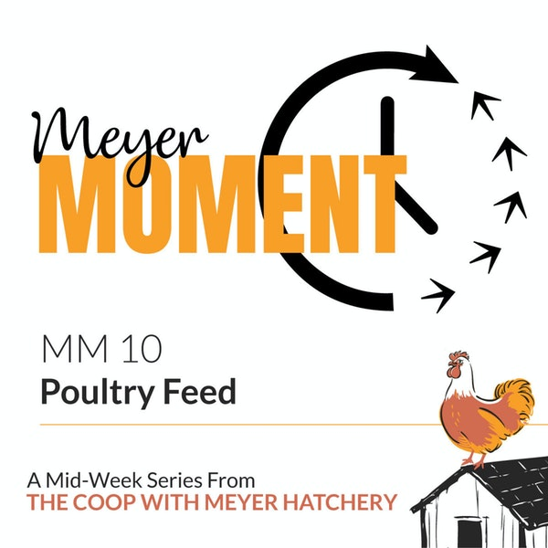 Meyer Moment: Poultry Feed Image
