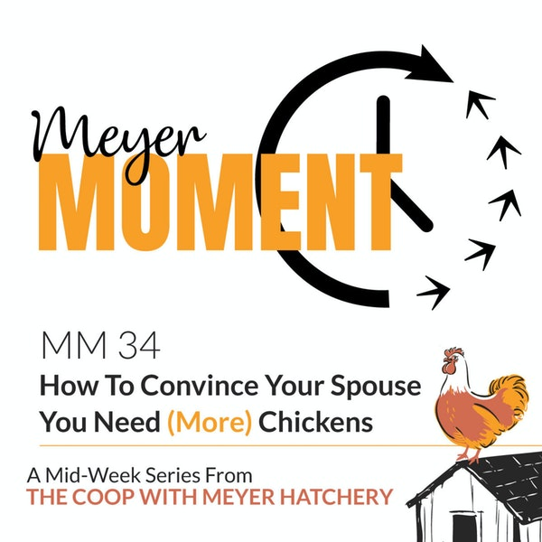 Meyer Moment: How To Convince Your Spouse You Need (More) Chickens Image