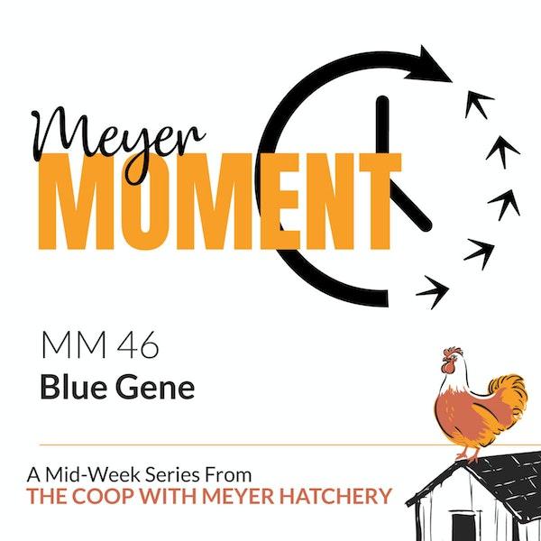 Meyer Moment: Blue Gene Image