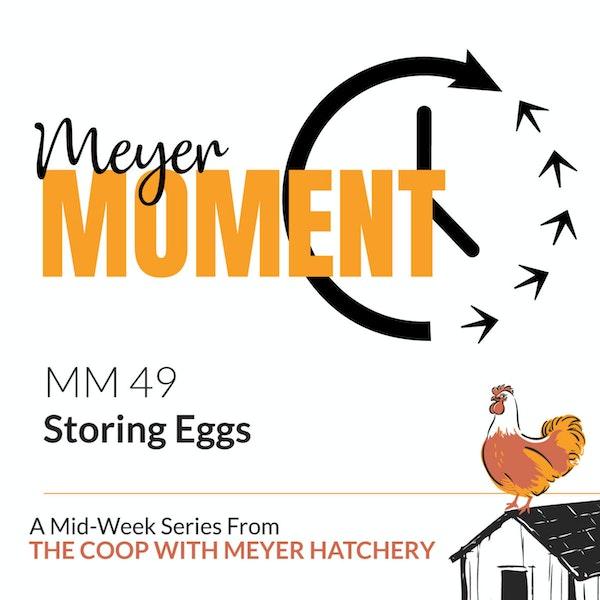 Meyer Moment: Storing Eggs Image