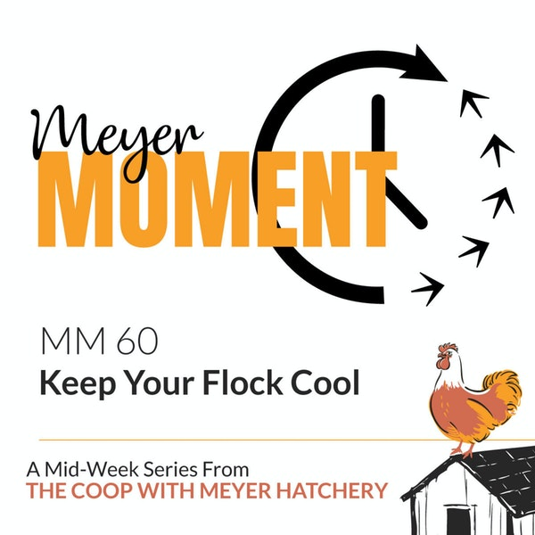 Meyer Moment: Keep Your Flock Cool Image
