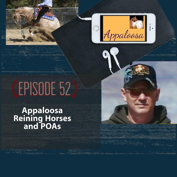 Appaloosa Reining Horses and POAs Image