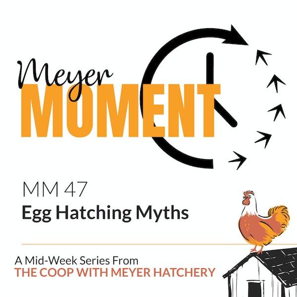 Meyer Moment: Egg Hatching Myths Image