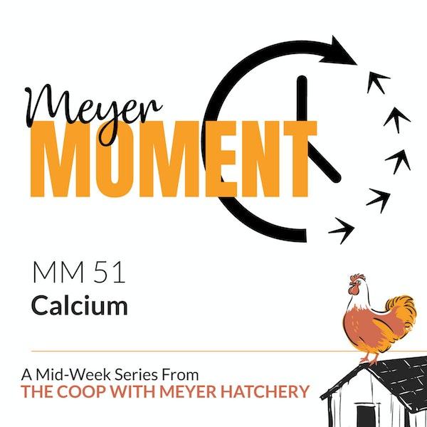 Meyer Moment: Calcium Image