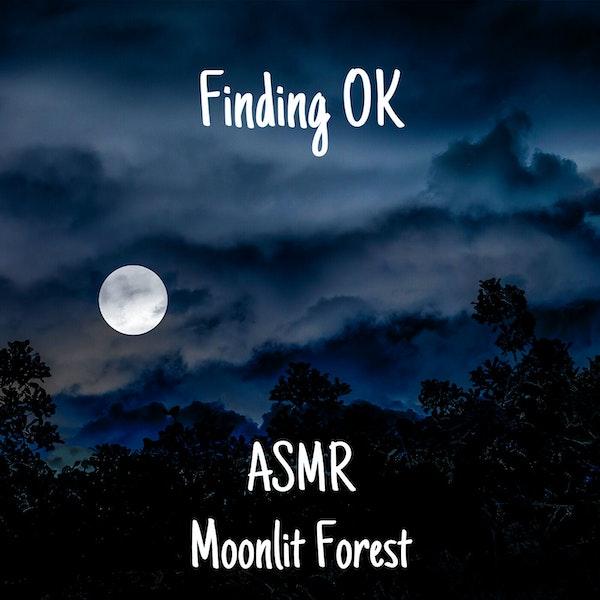 ASMR Moonlit Forest Image