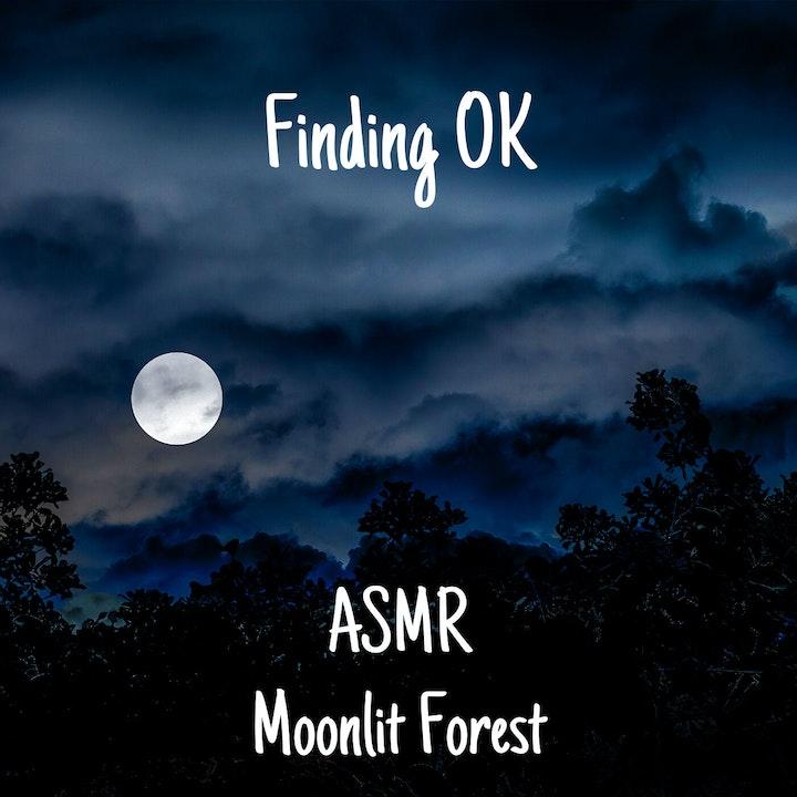 ASMR Moonlit Forest