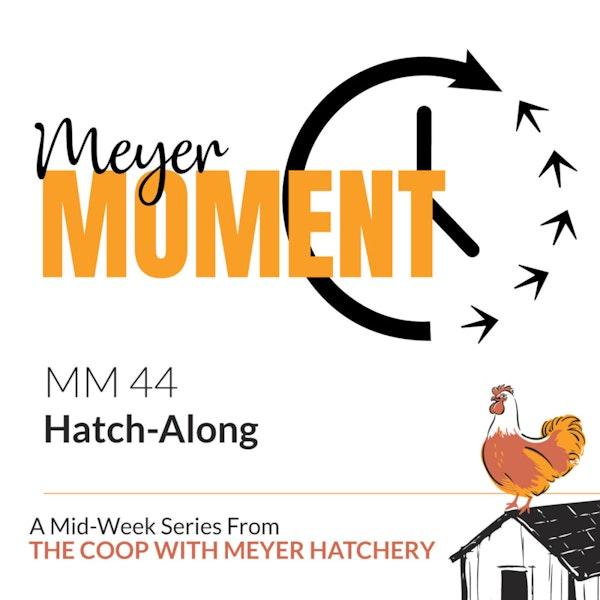 Meyer Moment: Hatch-Along Image