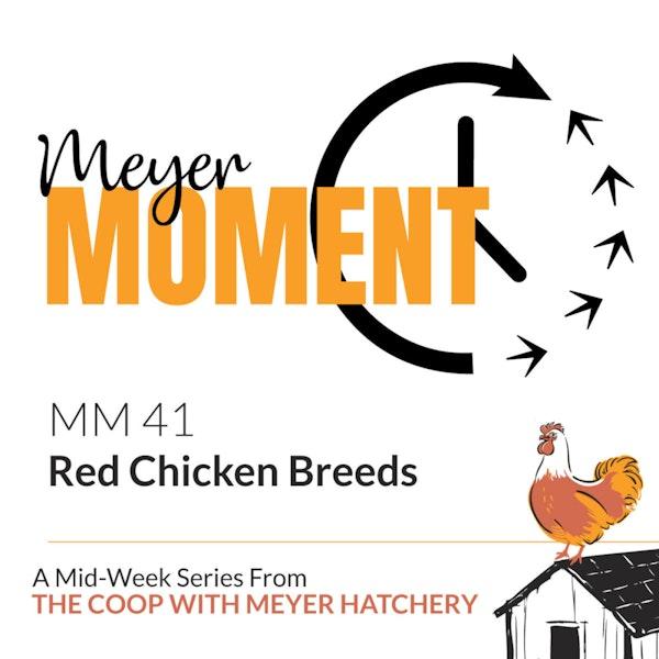 Meyer Moment: Red Chicken Breeds Image