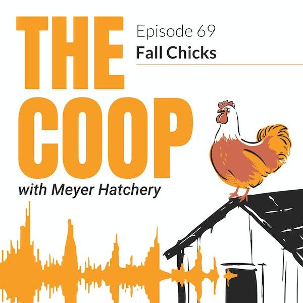 Fall Chicks