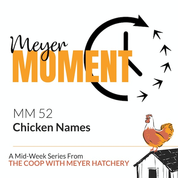 Meyer Moment: Chicken Names Image