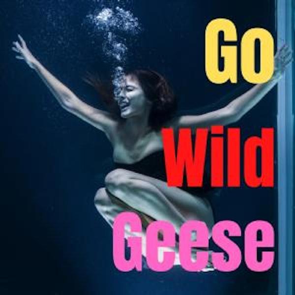 Go Wild Geese