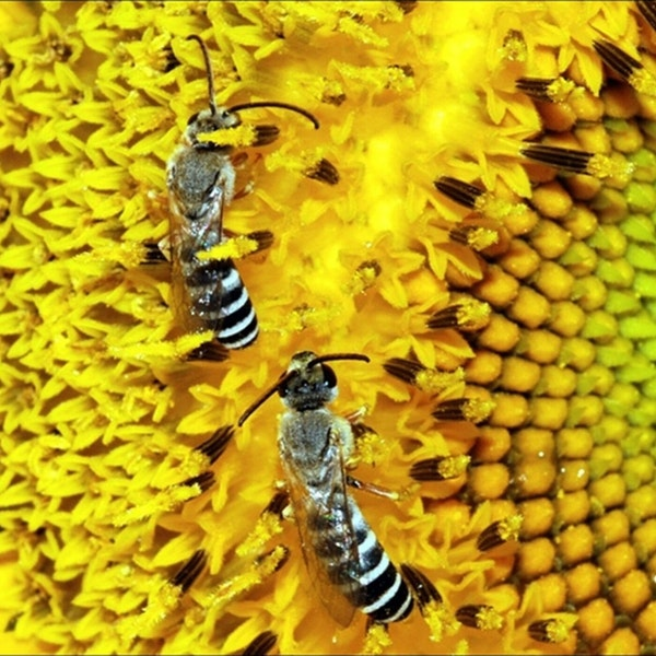 The buzz about bees Image