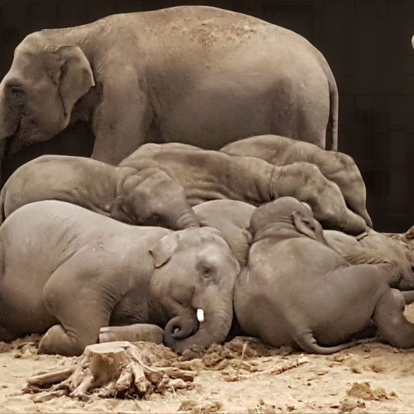 Do elephants count sheep? ... and other important questions... Image