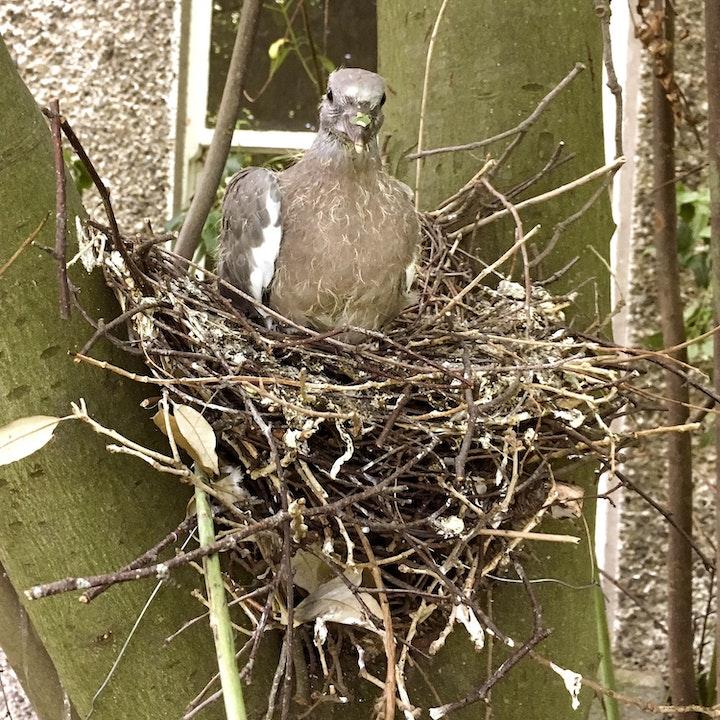 The Eggselence of Nests