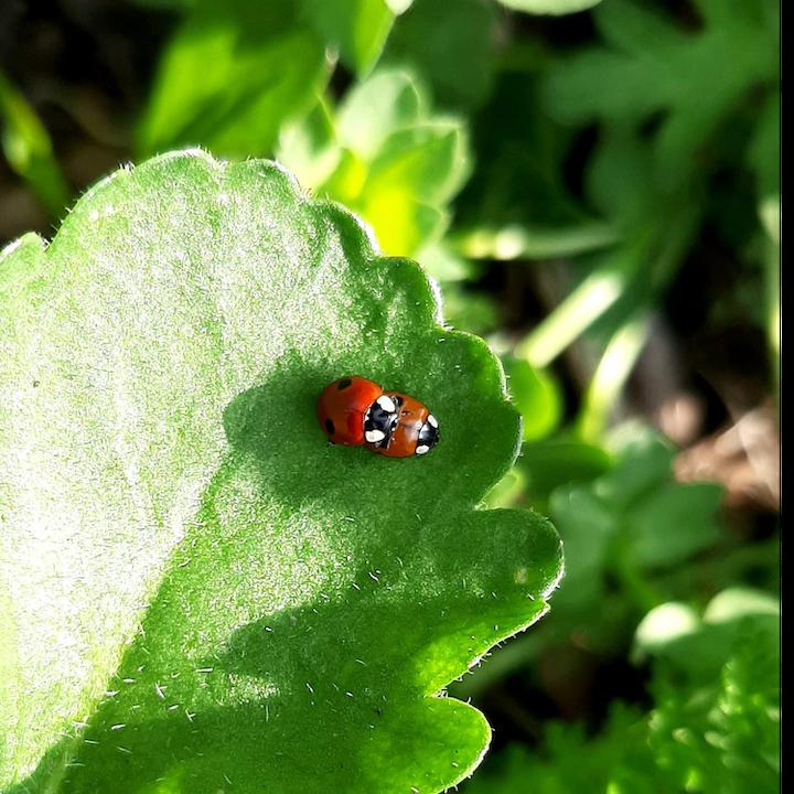 Saucy, sex-crazed space beetles: it's the ladybird show!