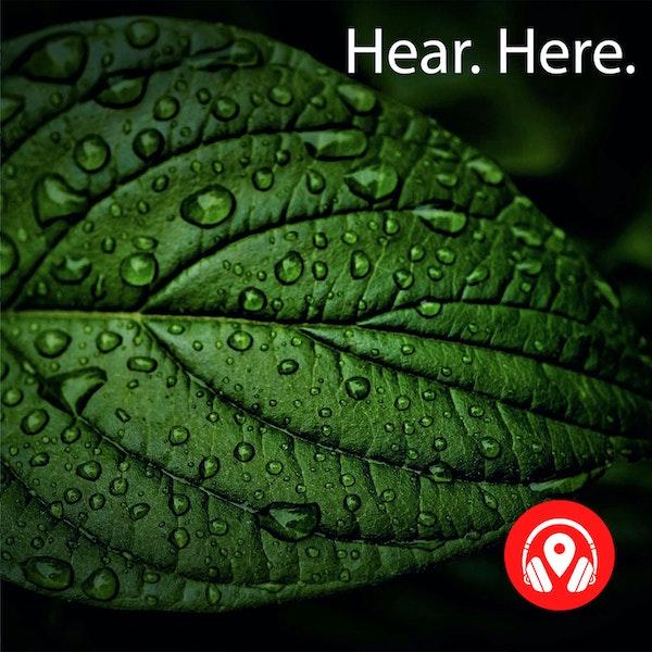 628926 Jurong Hill Light Rain - BB Delta Image
