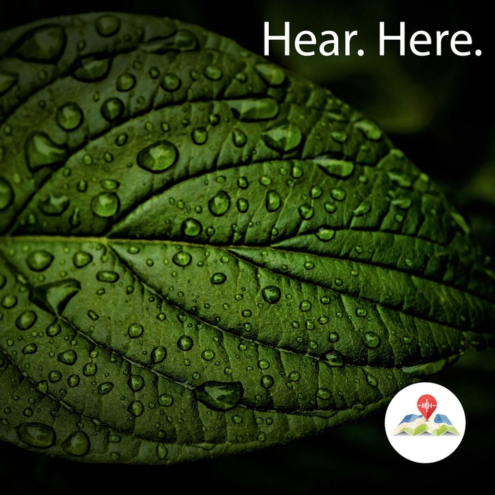 628926 Jurong Hill Light Rain - BB Delta