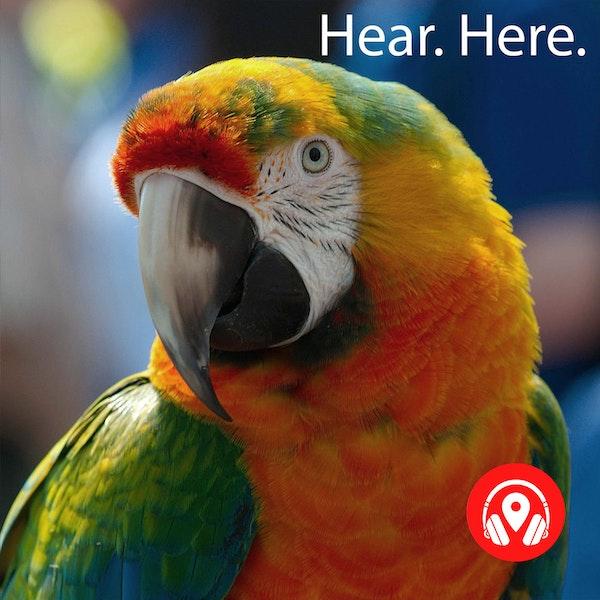 628925 Parrot Paradise
