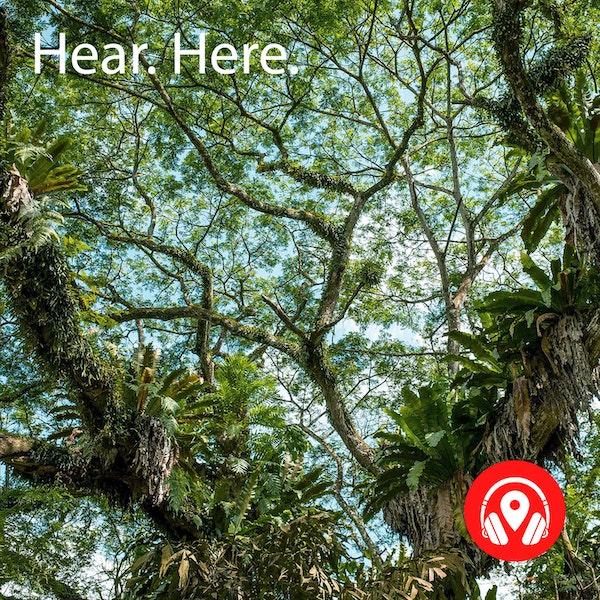 259569 Singapore Botanic Garden - BB Alpha Image